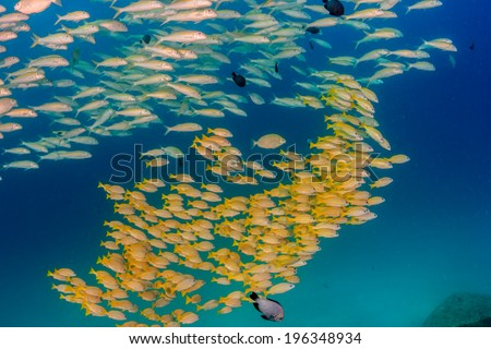 Shoal of tropical fish near a small underwater wreck - stock photo