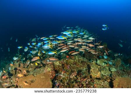 Shoals of tropical fish around a deep water coral pinnacle - stock photo