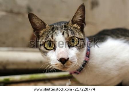 shocked cat with big eyes - stock photo
