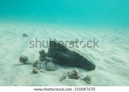 Shoe underwater - stock photo