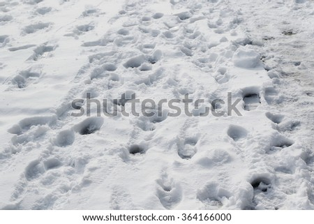 Shoeprints in snow background - stock photo