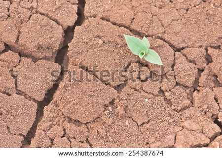 Shoot of young grass bud on drought soil - stock photo