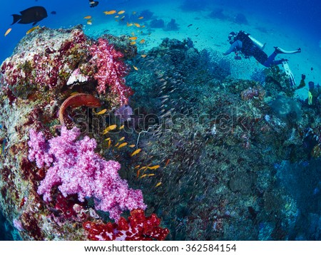 Shooting reef fish and coral grouper with diver, similan island, Thailand - stock photo