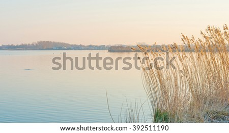 Shore of a lake at sunrise in winter