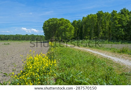 Shore of a sunny lake in spring - stock photo