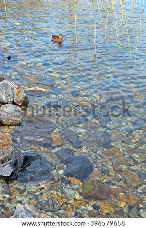 Shore of forest lake with crystal clear water