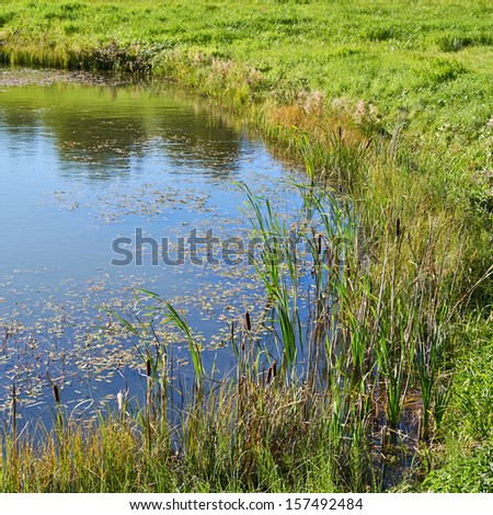 Shore of the wild pond outdoor nature composition - stock photo