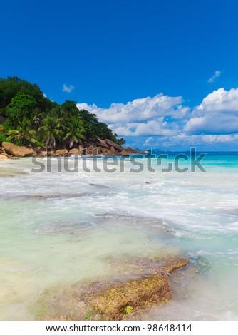 Shore Palms Dream - stock photo
