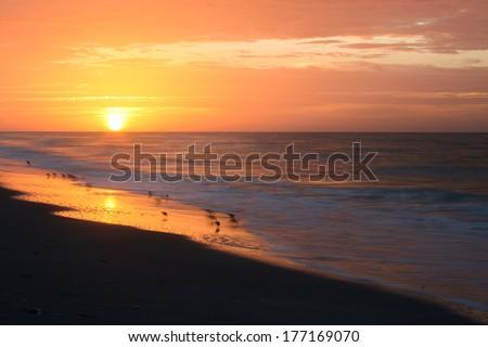 Shorebirds on the beach with the sun rising in the background.  Tarpon Bay Beach, Sanibel Island, FL, USA. - stock photo