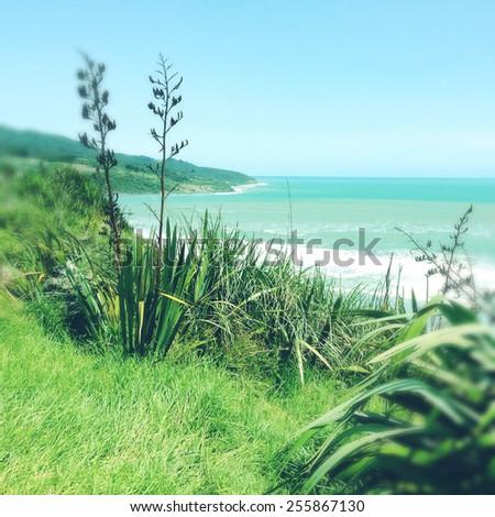 Shoreline and water, Raglan, New Zealand - stock photo