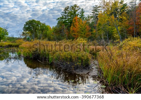 Shoreline of the Teal River in northern Wisconsin.