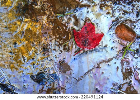 Shoreline where hazardous toxic chemical oil and gasoline waste have washed ashore.  A red maple leaf, an icon of Canada, floats in the contaminate.    - stock photo