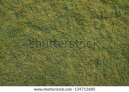 short green grass texture - stock photo