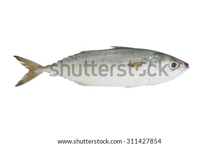 Short mackerel fish isolated on the white background