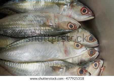 short mackerel in stainless steel pot ready for cook - soft and select focus