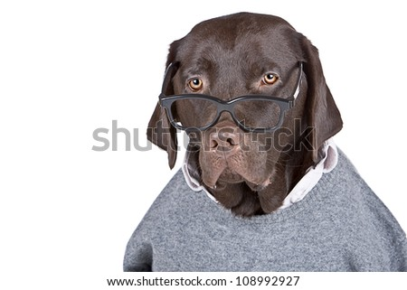 Shot of a Clever Looking Dog against White