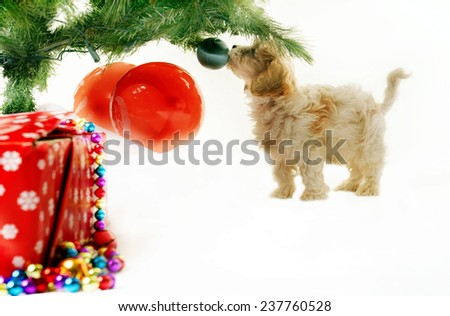 Shot of a dog playing with a christmas tree - stock photo