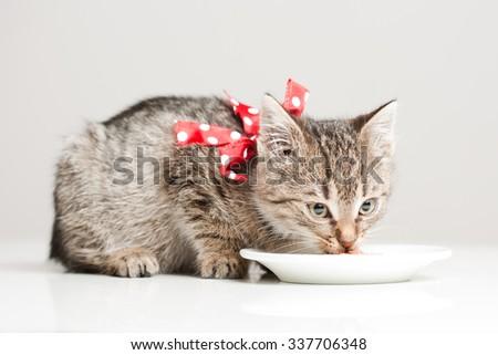 Shot of cute hungry little tabby kitten. - stock photo