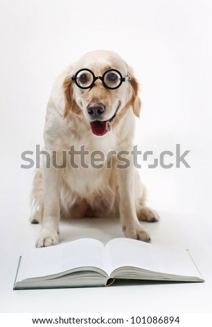 Shot of Golden Retriever with the book