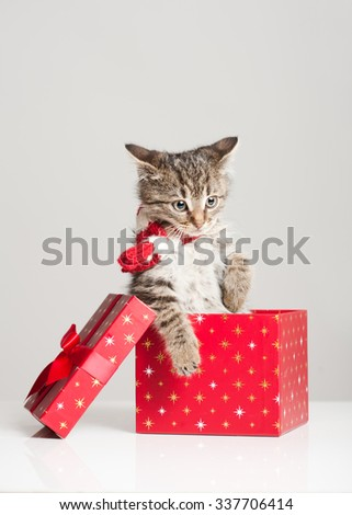 Shot of playful little kitten with decorative Christmas gift boxes.
