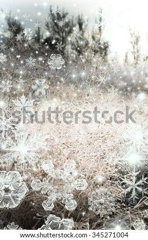 Shot of sparkling frost in a meadow of wild flowers
