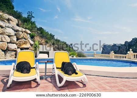 Shot of Two Chocolate Labradors Relaxing by the Pool - stock photo