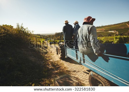 Shot of vineyard workers in tractor wagon transporting grapes to wine factory. Group of grape farmers in tractor trailer. - stock photo
