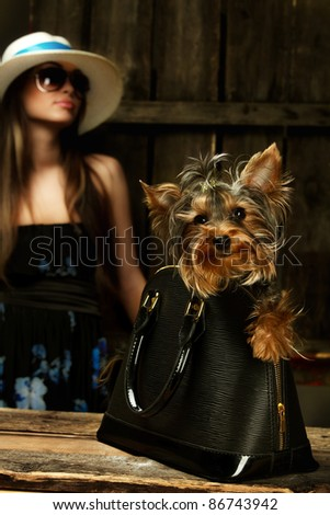 Shot of Yorkshire Terrier dog in bag and young glamor woman over wooden background - stock photo