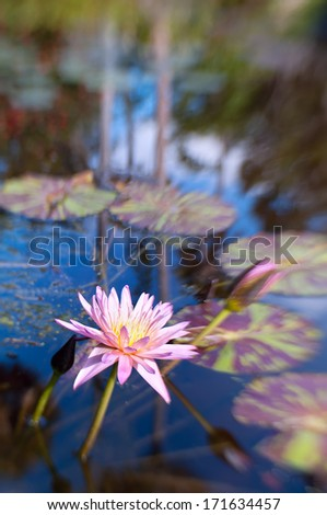 Shot with lensbaby 'sweet 35' optic with the sweet spot on the waterlily.  The beautiful bokeh created by the lens adds a  Monet-esque  painterly effect to the image.