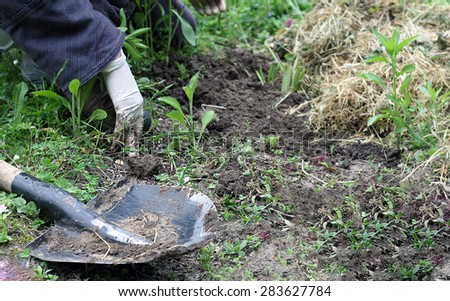 shovel and planting seedlings in the ground