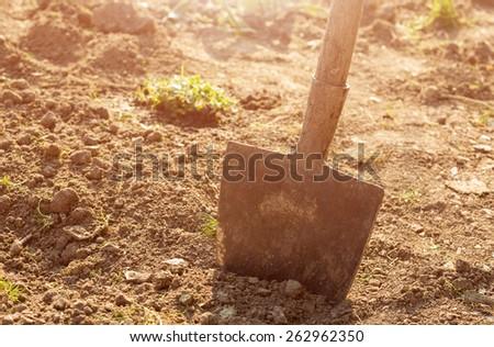 Shovel in the garden - stock photo