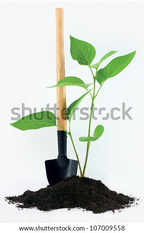 Shovel with a little plant and ground on white background - stock photo