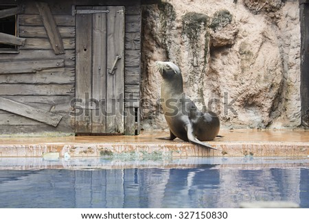 Show sea lion in zoo, animals and nature - stock photo