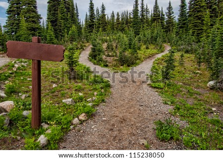 Showing a path splitting into two going into the woods with a blank signpost. - stock photo