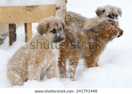 Shpherd puppy dog in the snow - stock photo