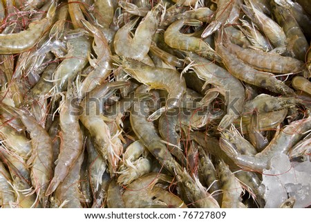 Shrimp on the market in Thailand