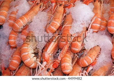 SHRIMPS - stock photo