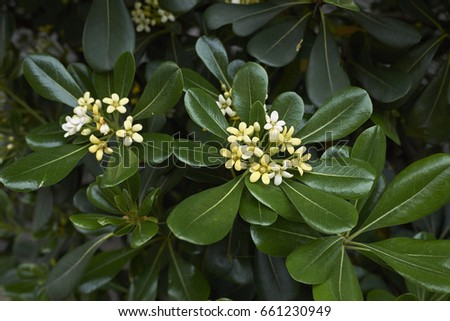 Shrub fragrant white flowers stock photo royalty free 661230949 shrub with fragrant white flowers mightylinksfo
