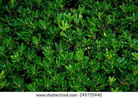 Shrubs in Montenegro - stock photo