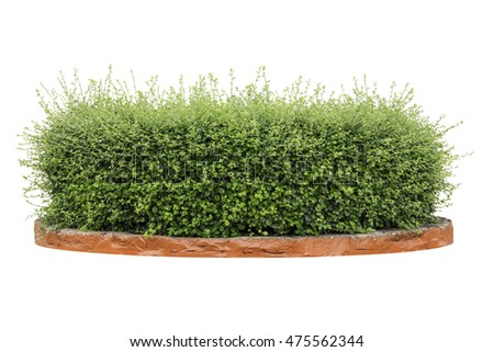 shrubs or bush isolated,Objects with Clipping Paths