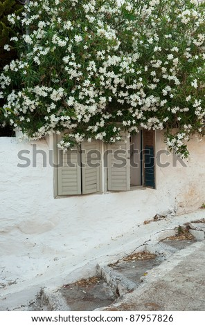 shrubs with white flowers around the white building on the streets of Greece - stock photo