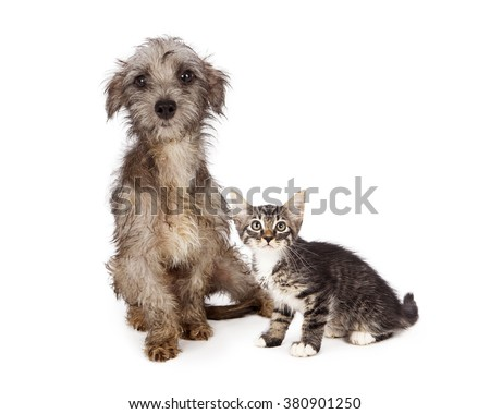 Shy and scared little rescue kitten and puppy with messy and dirty fur - stock photo