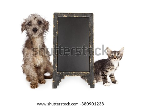 Shy and scared rescue kitten and little dog with scruffy and dirty fur sitting next to blank chalkboard sign - stock photo
