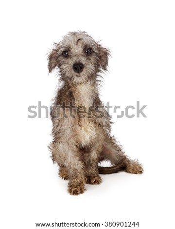 Shy and scared young rescue dog with dirty and shaggy fur in need of a bath and groom - stock photo