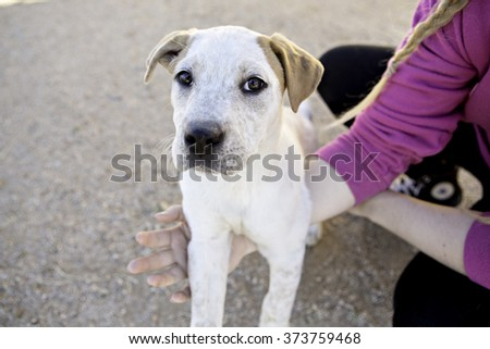 Shy little puppy sitting outside being held - stock photo
