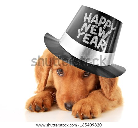 Shy puppy wearing a Happy New Year top hat. - stock photo