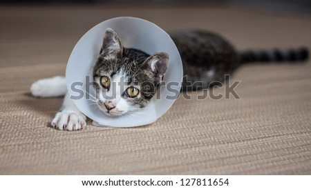 Siamese cat in a cone lie leisurely on a mat - stock photo