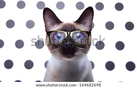Siamese cat in stylish glasses - stock photo