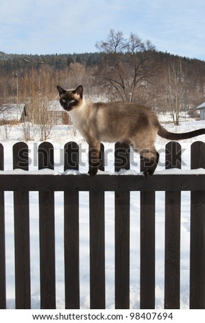 siamese cat on the fence - stock photo
