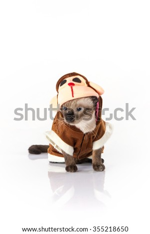 Siamese cat with a monkey costume on a white background - stock photo